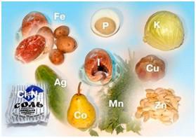 Тестирование витаминов и микроэлементов